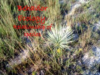 Behavior Ecology : Relationship of species