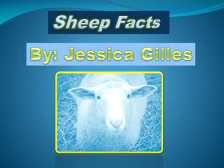 Sheep Facts