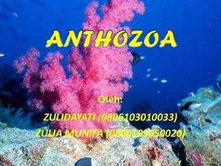 Oleh : ZULIDAYATI (0806103010033) ZULIA MUNIFA (0806103050020)