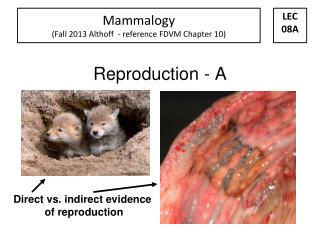 Reproduction - A