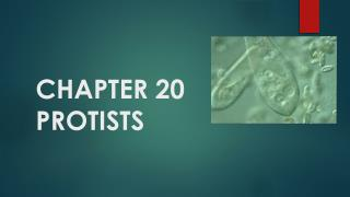 CHAPTER 20 PROTISTS