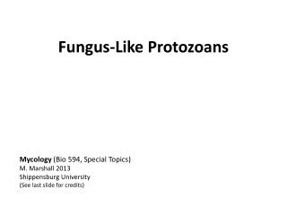 Fungus-Like  P rotozoans
