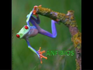 i.telegraph.co.uk/multimedia/archive/01891/cool-frog_1891806i.jpg