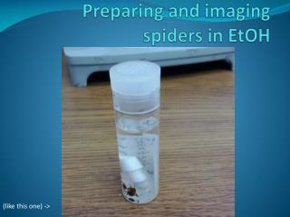 Preparing and imaging  spiders in  EtOH