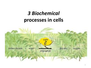 3 Biochemical processes in cells