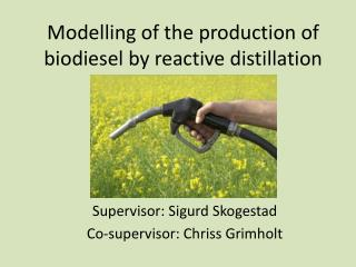 Modelling of the production of biodiesel by reactive distillation