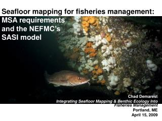Seafloor mapping for fisheries management:   MSA requirements and the NEFMC's  SASI model