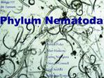 Pseudocoelomates:Phylum Nematoda