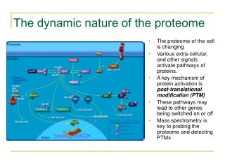 The dynamic nature of the proteome