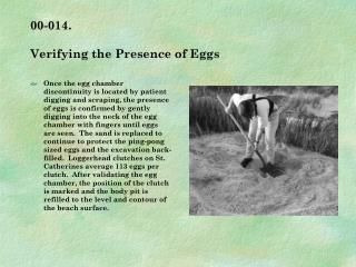 00-014.   Verifying the Presence of Eggs