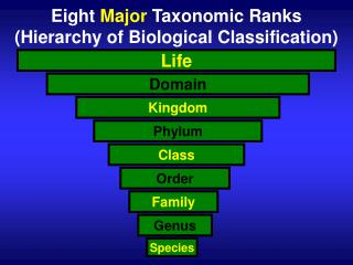 Eight  Major  Taxonomic Ranks (Hierarchy of Biological Classification)