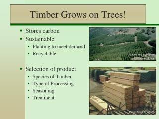 Timber Grows on Trees!