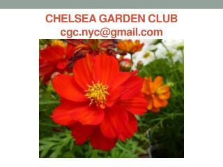 CHELSEA GARDEN CLUB cgc.nyc@gmail