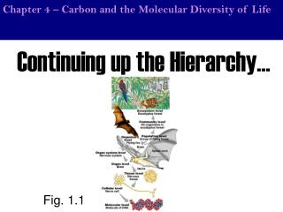 Chapter 4 – Carbon and the Molecular Diversity of Life