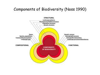 Components of Biodiversity (Noss 1990)