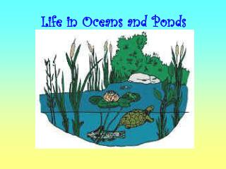 Life in Oceans and Ponds