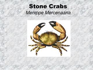 Stone Crabs Menippe Mercenaaria