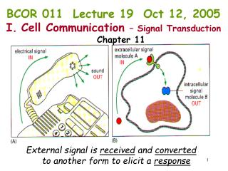 External signal is  received  and  converted       to another form to elicit a  response