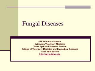 Fungal Diseases