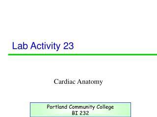 Lab Activity 23