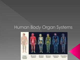 Human Body Organ Systems