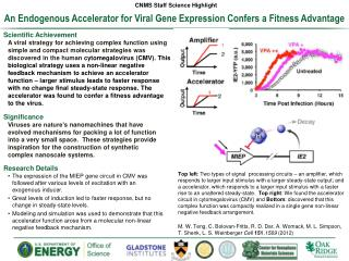 An Endogenous Accelerator for Viral Gene Expression  Confers  a Fitness Advantage