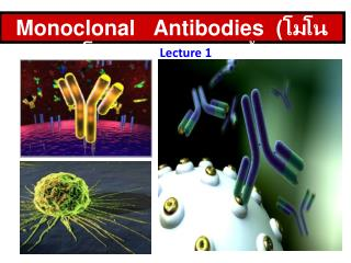 Monoclonal   Antibodies   (????????????????????)