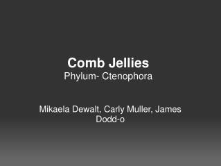 Comb Jellies Phylum- Ctenophora