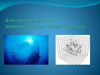Birds flock, fishes school: Modeling Emergent Collective Behavior