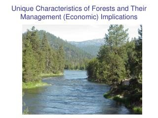 Unique Characteristics of Forests and Their Management (Economic) Implications