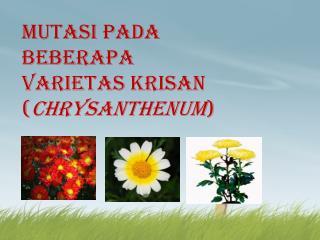 Mutasi pada Beberapa Varietas Krisan ( Chrysanthenum )