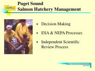 Puget Sound  Salmon Hatchery Management