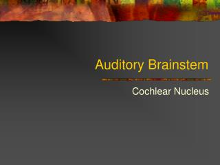 Auditory Brainstem