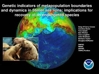 Genetic indicators of metapopulation boundaries and dynamics in Steller sea lions: implications for recovery of an endan