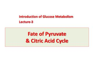 Fate of  Pyruvate & Citric Acid Cycle
