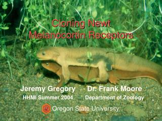 Cloning Newt Melanocortin Receptors
