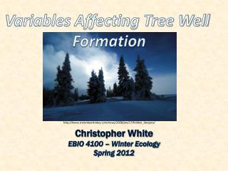 Christopher White EBIO 4100 – Winter Ecology Spring 2012