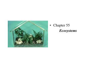 Chapter 55 Ecosystems