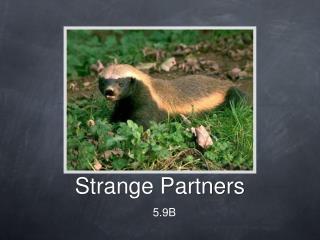 Strange Partners