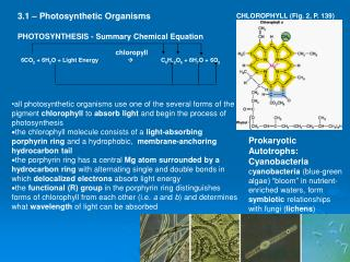 3.1 – Photosynthetic Organisms PHOTOSYNTHESIS - Summary Chemical Equation