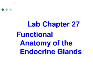 Lab Chapter 27 Functional Anatomy of the Endocrine Glands