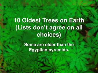 10 Oldest Trees on Earth (Lists don't agree on all choices)