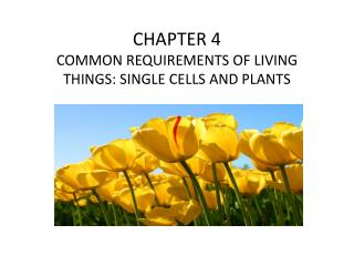 CHAPTER 4 COMMON REQUIREMENTS OF LIVING THINGS: SINGLE CELLS AND PLANTS