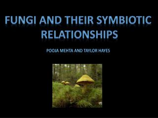 Fungi and Their Symbiotic Relationships