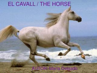 EL CAVALL / THE HORSE