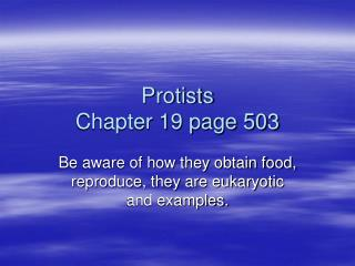 Protists Chapter 19 page 503