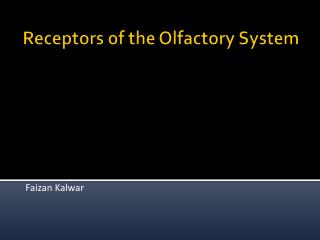 Receptors of the Olfactory System