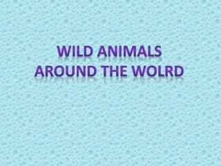 Wild animals Around the wolrd