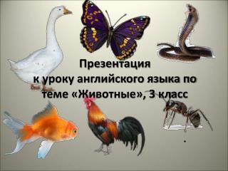 Презентация  к уроку английского языка по теме «Животные», 3 класс