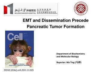 EMT and Dissemination Precede Pancreatic Tumor Formation